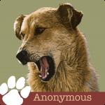 LVH0004_Pet Blog_Anonymous2