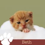 LVH0004_Pet Blog_Beth