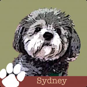 LVH0004_Pet Blog_Sydney