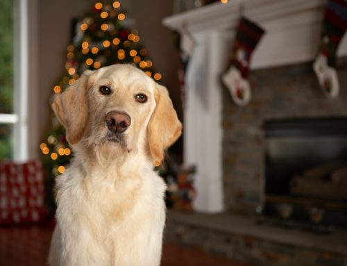 15 Tips for Pet Owners to Help Prevent Holiday Catastrophes