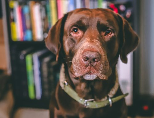 Senior Status is Not a Disease: How to Care for an Older Pet