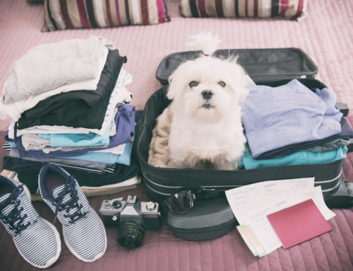 Pack Your Bags: Prepping Your Pet for Traveling or Boarding