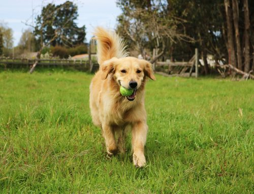 Breed All About It: Choosing the Right Breeder and Pet for Your Family