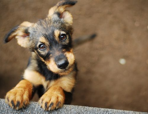 5 Myths About Puppy Success, Debunked