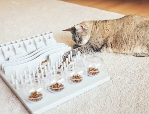 4 Tips to Purrfectly Enrich Your Indoor Cat