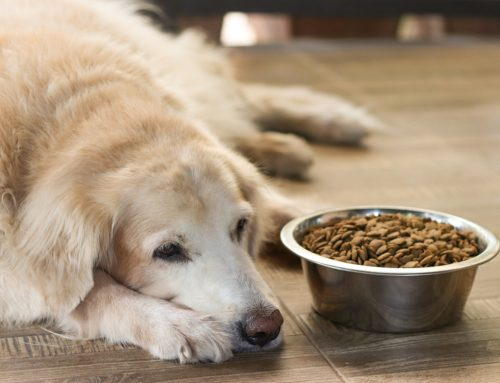 Kidney Failure In Pets: Your Questions Answered